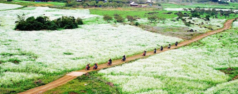 Na Ka valley turns white in plum flowers